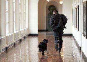 Bo jogs along w/ Pres Obama