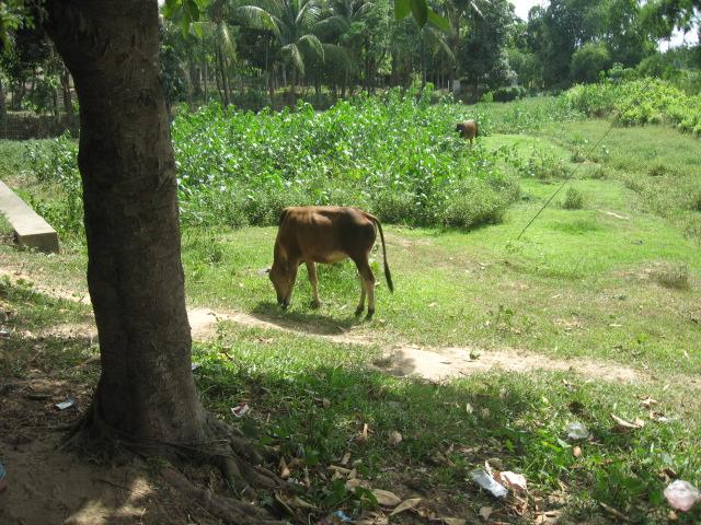 Bangladesh 387