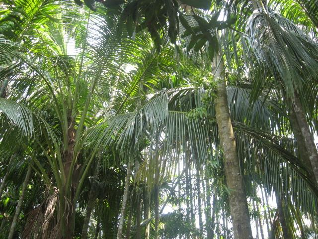 Bangladesh 437