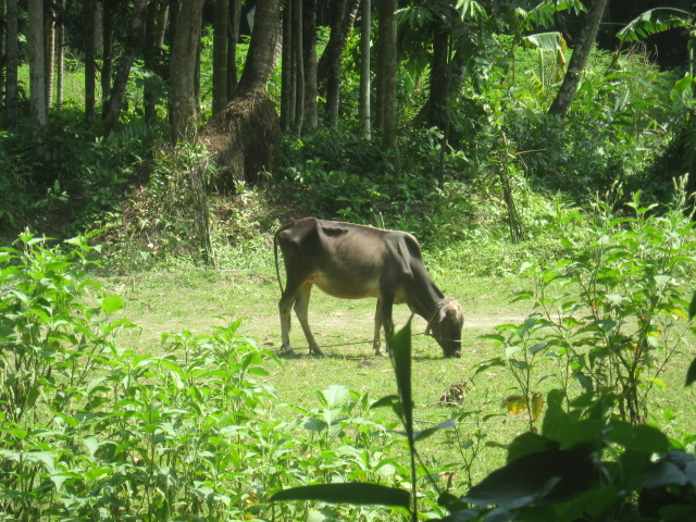 Bangladesh 455